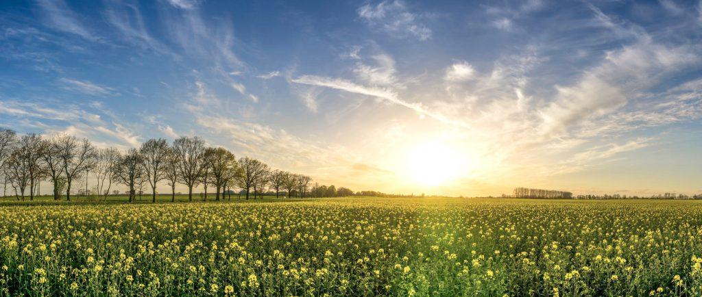 Feldlandschaft mit Bäumen und aufgehender Sonne